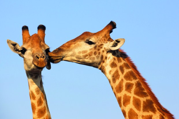 Be my Valentine!  Wild romance Animal love