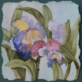 <h5>Hawaiian Orchid</h5><p>Watercolor  SOLD</p>