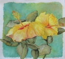 <h5>Kauai Hisbiscus</h5><p>Watercolor</p>