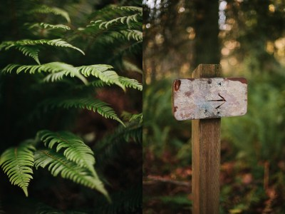 Betrothed | Clint + Megan | Olympia WA Lifestyle ...