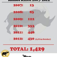 South Africa: 430 Rhinos Killed in 277 Days