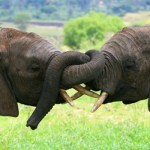 Report Confirms Wildlife Trafficking Threatens Global Security