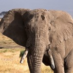 Chad and Tanzania Will Destroy Ivory Stockpiles