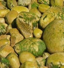 photo showing Irish Yellow Green