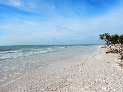 Honeymoon Island State Park, Florida | Another Walk in the ...