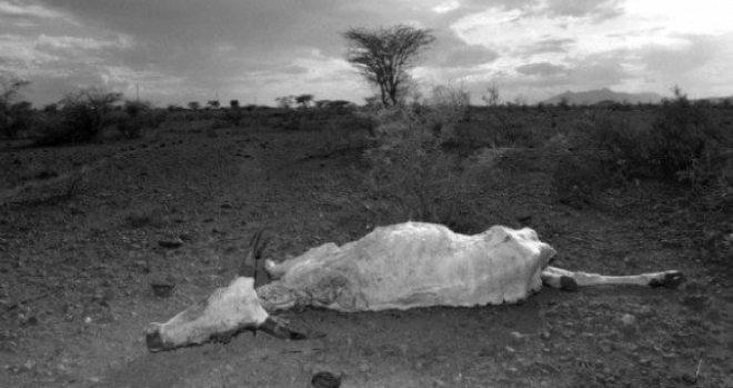Ethiopia Famine