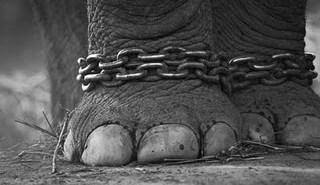 ElephantChains