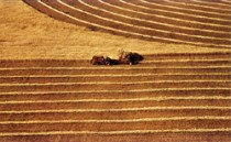 Η μεγάλη στροφή των νέων στη γεωργία. Μύθος και πραγματικότητα