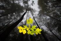 GDT – Φωτογράφος φύσης για το 2013