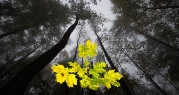 GDT Nature Photographer of the Year 2013