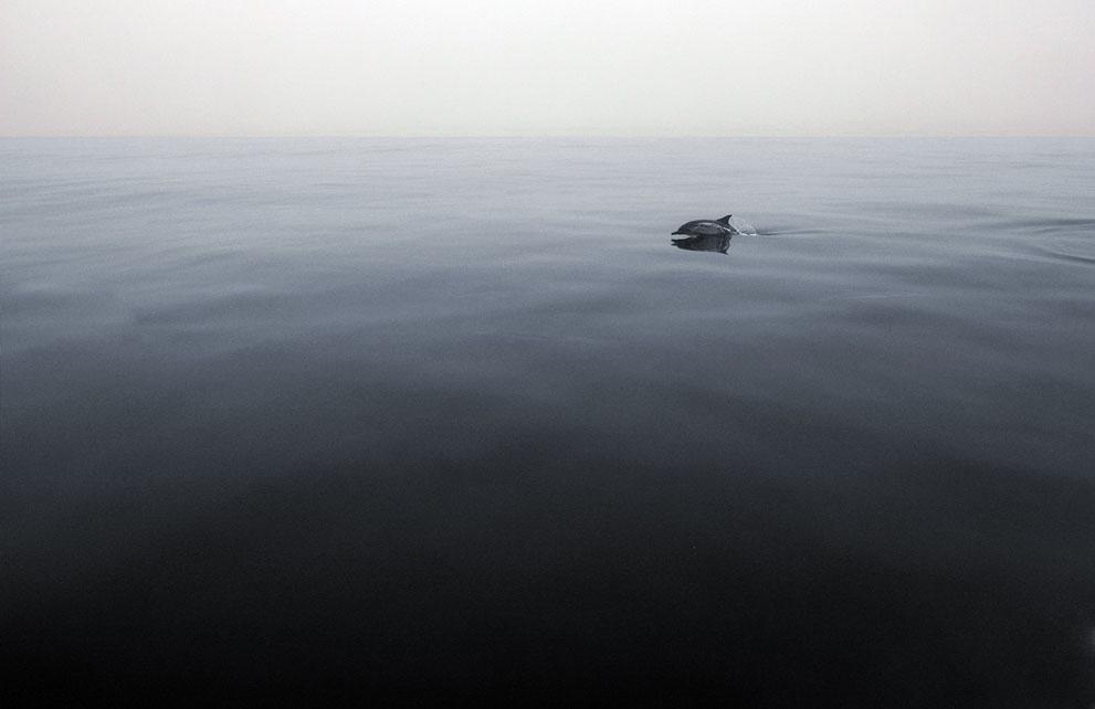 Το μοναχικό δελφίνι δεν μπορούσε παρά να ήταν ότι πιο όμορφο μπορούσε ν αναδυθεί από το νερό του ωκεανού εκείνη τη στιγμή . Τοποθεσία: Channel Islands, Καλιφόρνια.  Robin Benson