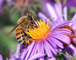 Bee_flower_98
