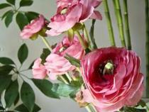 25 πανέμορφες φωτογραφίες τριαντάφυλλων