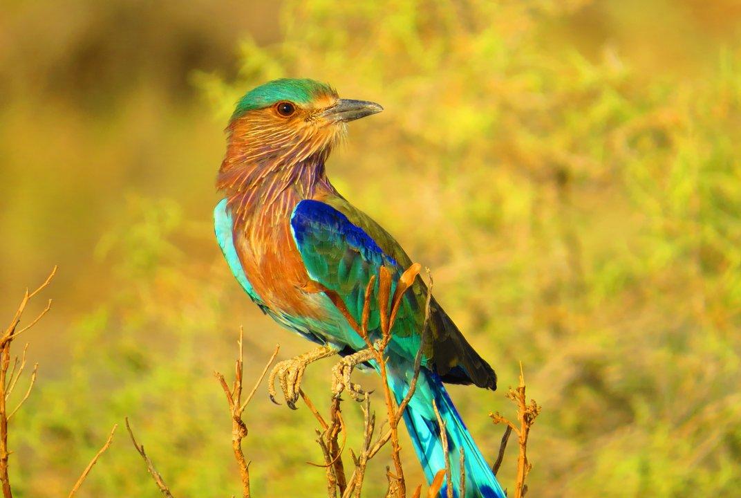 Πολύχρωμο πουλί στο Ιράν