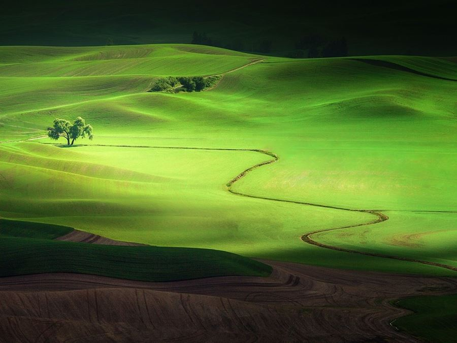 Lone Tree, Washington, ΗΠΑ