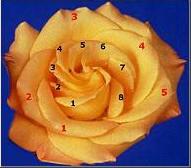 Fibona50