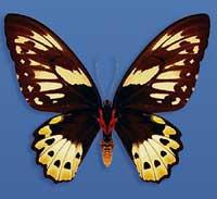 Η αμφίπλευρη συμμετρία της πεταλούδας.