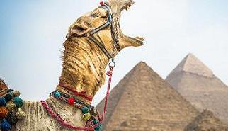 camel-yawn-pyramid