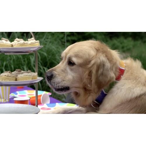 Medium Crop Of Dog Birthday Party