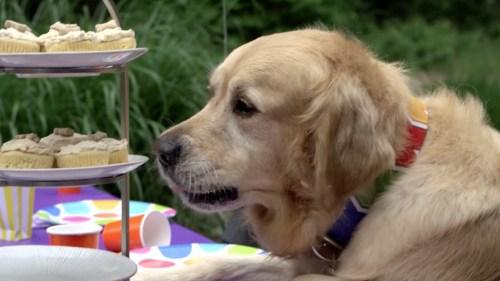 Medium Of Dog Birthday Party