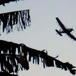Aerial spraying to control banana disease