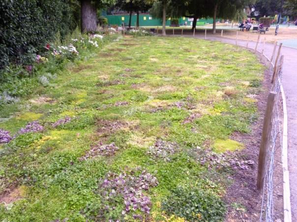 A grass-free lawn at Avondale Park