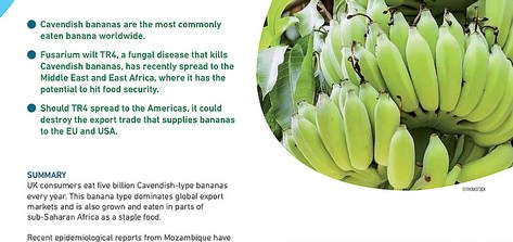 Briefing: banana disease
