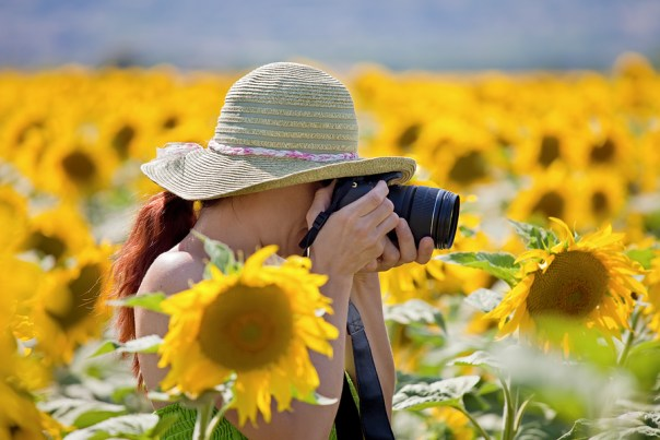 Young Woman Taking Photos Of Sunflowers.