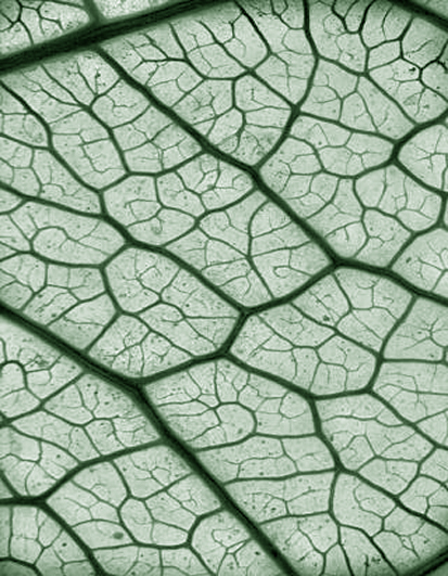 Clear way ahead for leaf research