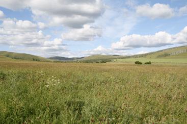 The beautiful grassland in Inner Mongolia, China. Photo credit: Yanjie Liu.