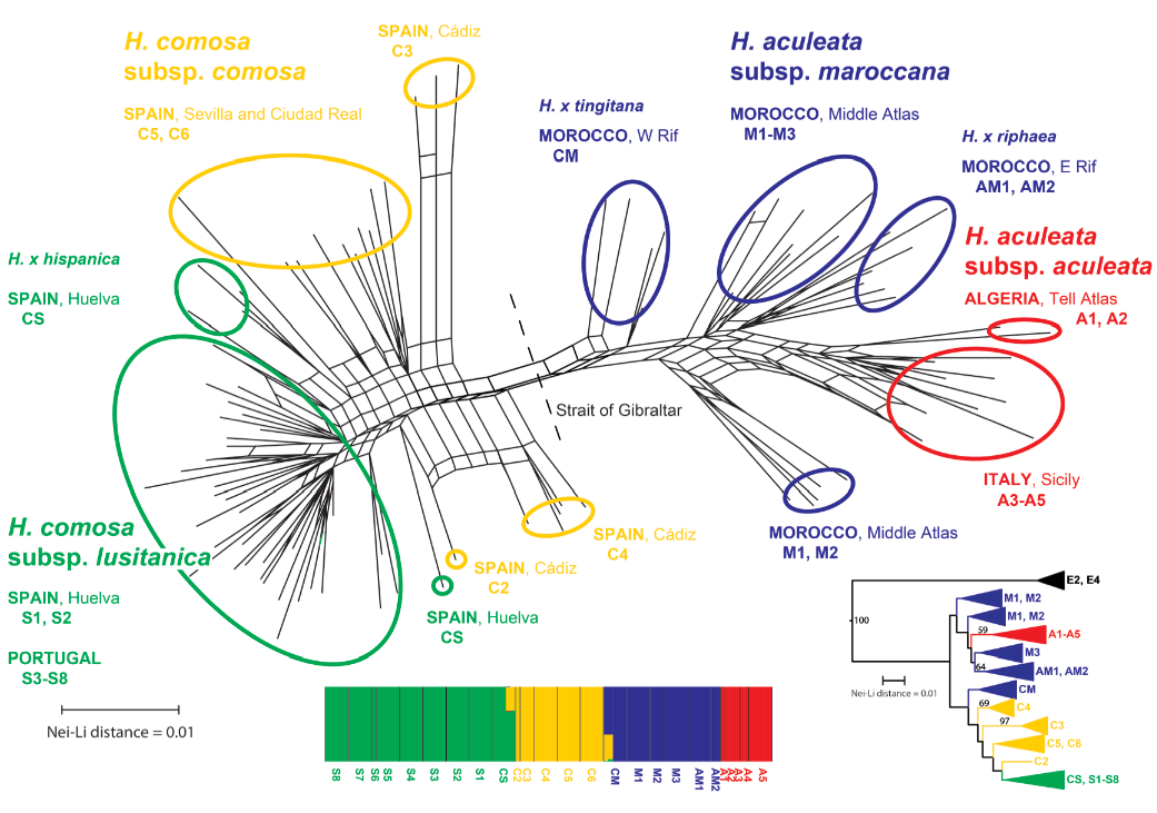 Phylogeography above the species level for perennial species in a composite genus