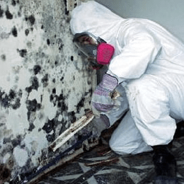 Mold remediator fixing and cleaning customer's house