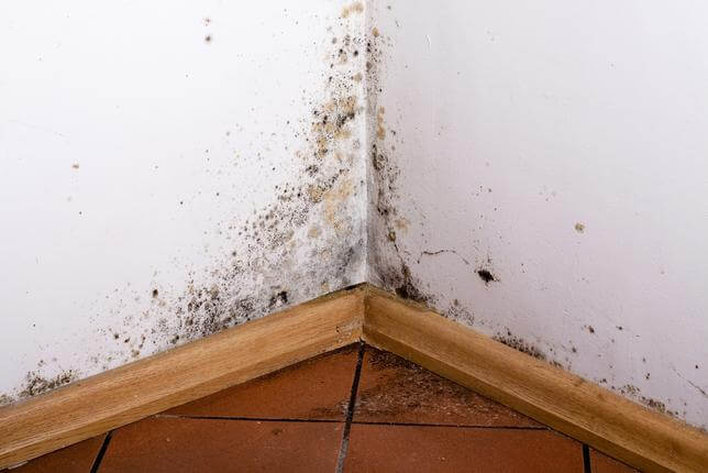 Mold on Walls in Need of Dehumidifier