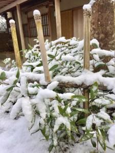 茶室「聴樹庵」笹の雪