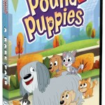 Pound Puppies, Raining Cats and Dogs, And ….An Alligator?