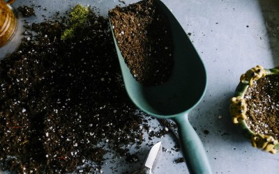 Yes, You Can Compost In Your Apartment