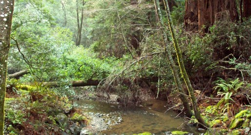 A Tree Huggers Fantasy: Muir Woods