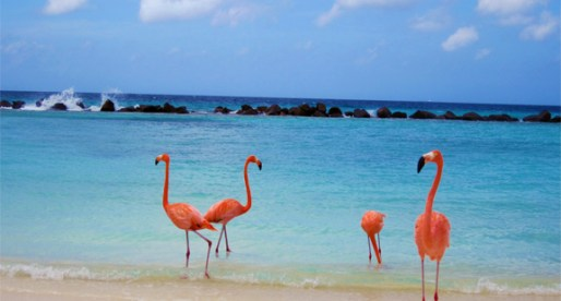 ARUBA: Best Things to See and Do