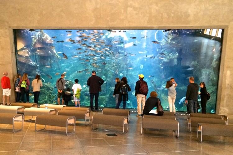 seattle aquarium wall