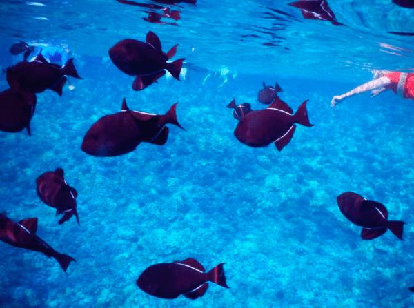 snorkeling at the molokini crater, maui | www.apassionandapassport.com
