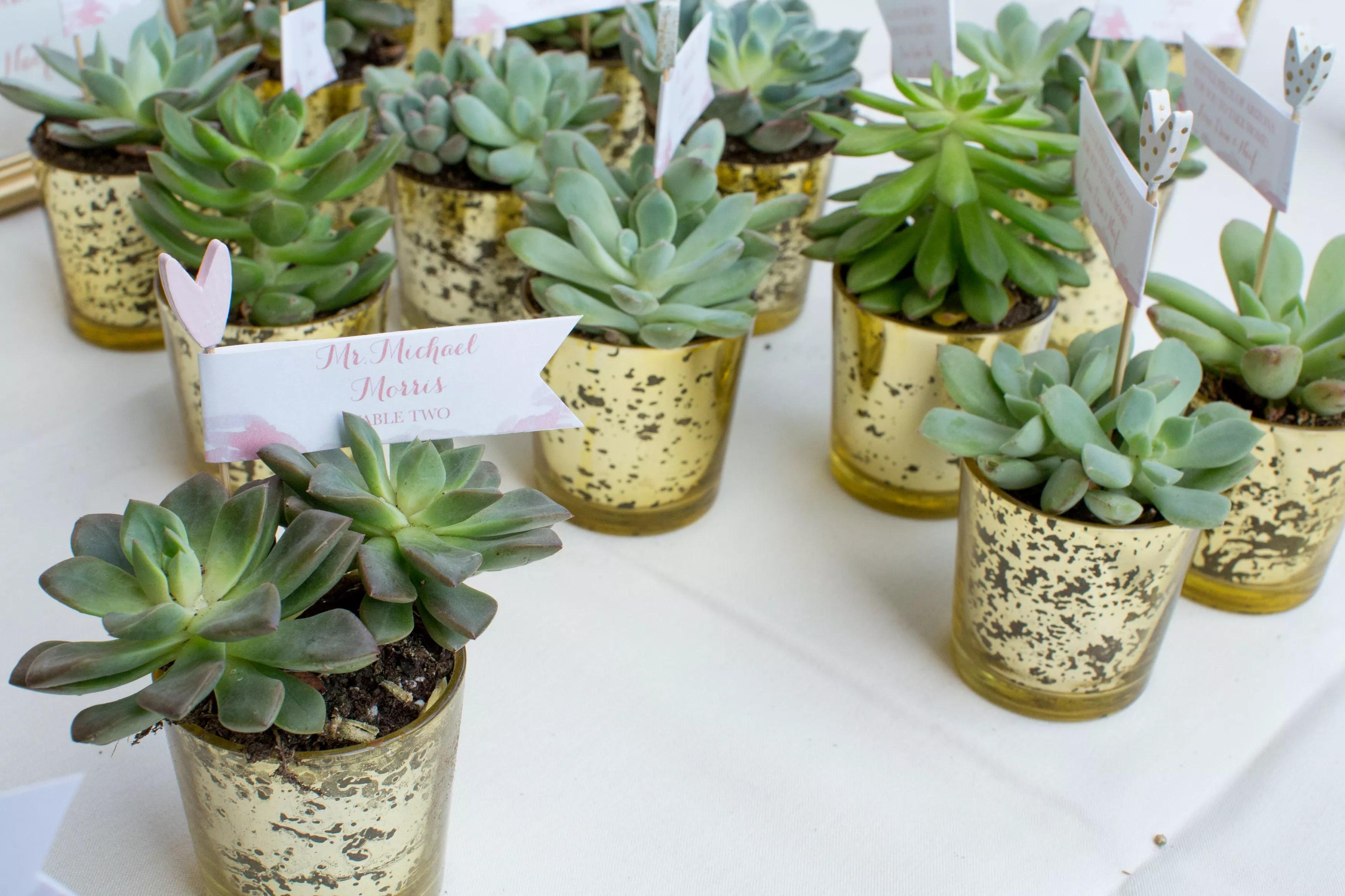 succulent wedding favors as escort cards photo succulent wedding favors