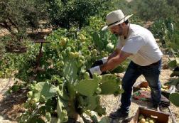 Ορίστηκαν οι νέοι φυτοϋγειονομικοί ελεγκτές στην Κρήτη