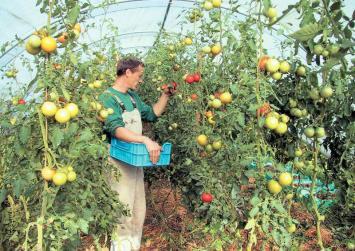 Εκλογές στον Αγροτικό σύλλογο Ιεράπετρας το Νοέμβρη