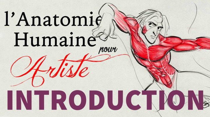 Introduction à l'Anatomie Humaine pour Artiste