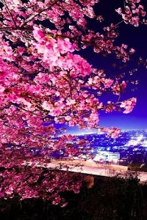 3D Sakura Live Wallpaper HD