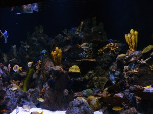 Fishes for the Beginning Marine Aquarist