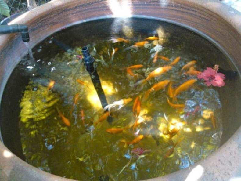Bassin d ornement jardin reims 2119 - Bassin balcon poisson grenoble ...