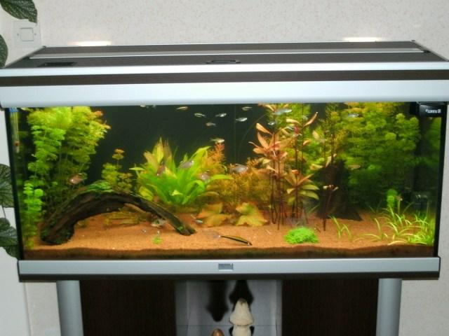 Aquarium : Aquatlantis Ambiance 101 par gummi