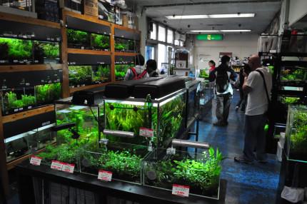 aquarium-shop