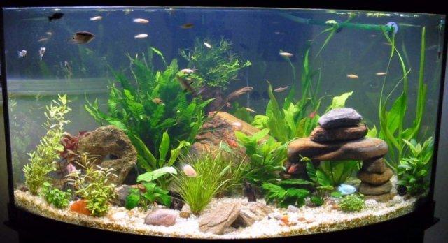 Saltwater Aquariums | aquarium cares